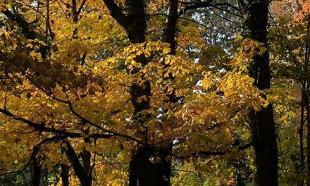 Cool Crisp Autumn Air…
