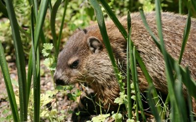 Groundhog Day at Maryknoll
