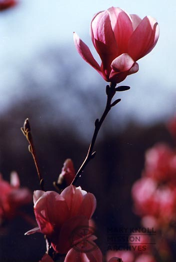 Flower and Bud