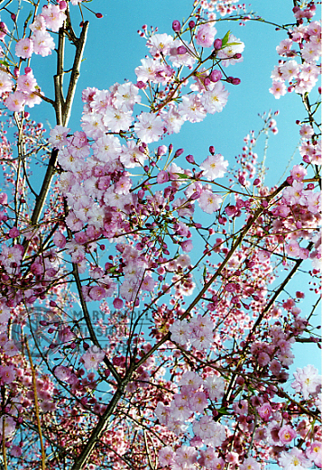 Blooming flowers and sky